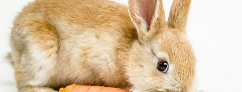 กระต่ายตลาดนัด เลี้ยงยังไงให้รอด