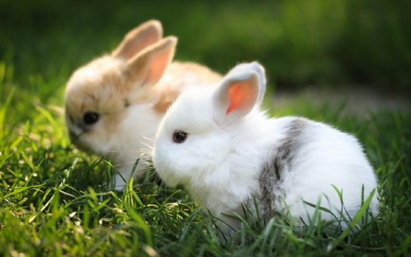 กระต่ายตลาดนัด