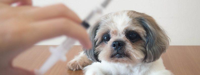 เคล็ดลับการดูแลสุขภาพ ที่คนรักสัตว์ต้องรู้