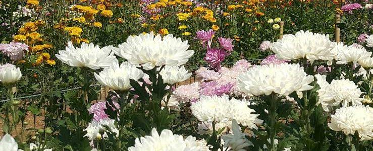 ไม้ดอกไม้ประดับที่ควรปลูกดูดสารพิษในอาคาร